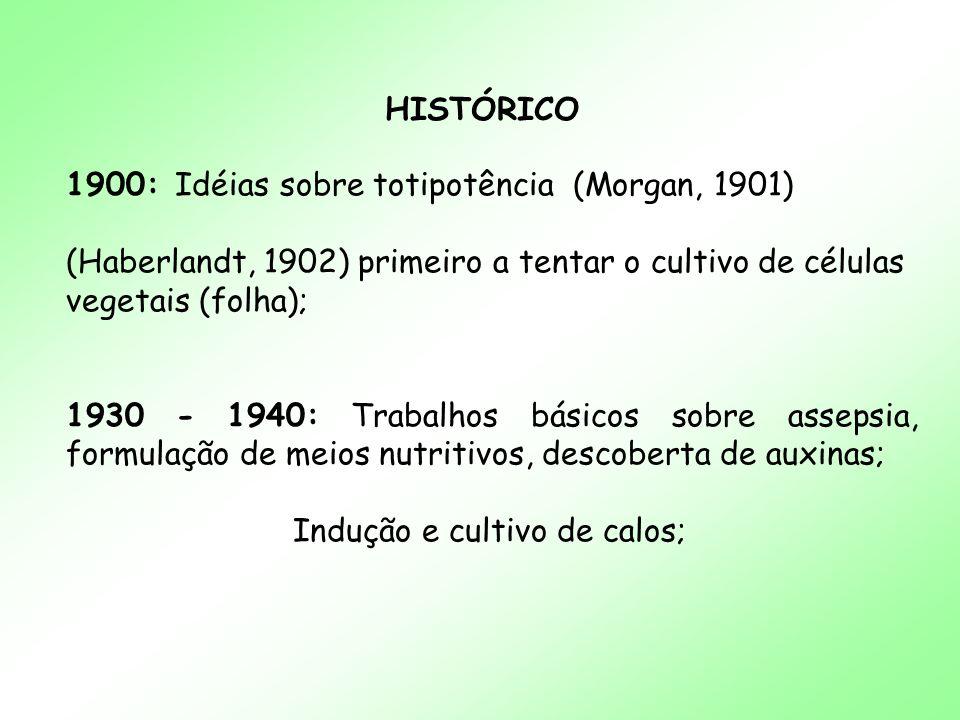 HISTÓRICO 1900: Idéias sobre totipotência (Morgan, 1901) (Haberlandt, 1902) primeiro a tentar o cultivo de células vegetais (folha); 1930 - 1940: Trab