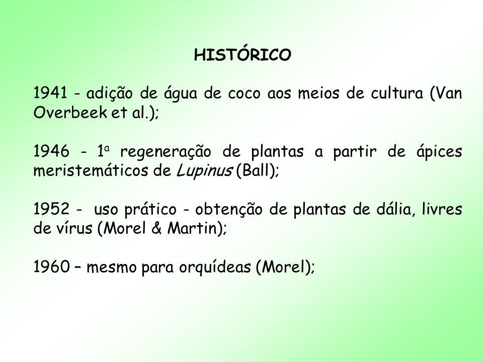 HISTÓRICO 1941 - adição de água de coco aos meios de cultura (Van Overbeek et al.); 1946 - 1 a regeneração de plantas a partir de ápices meristemático