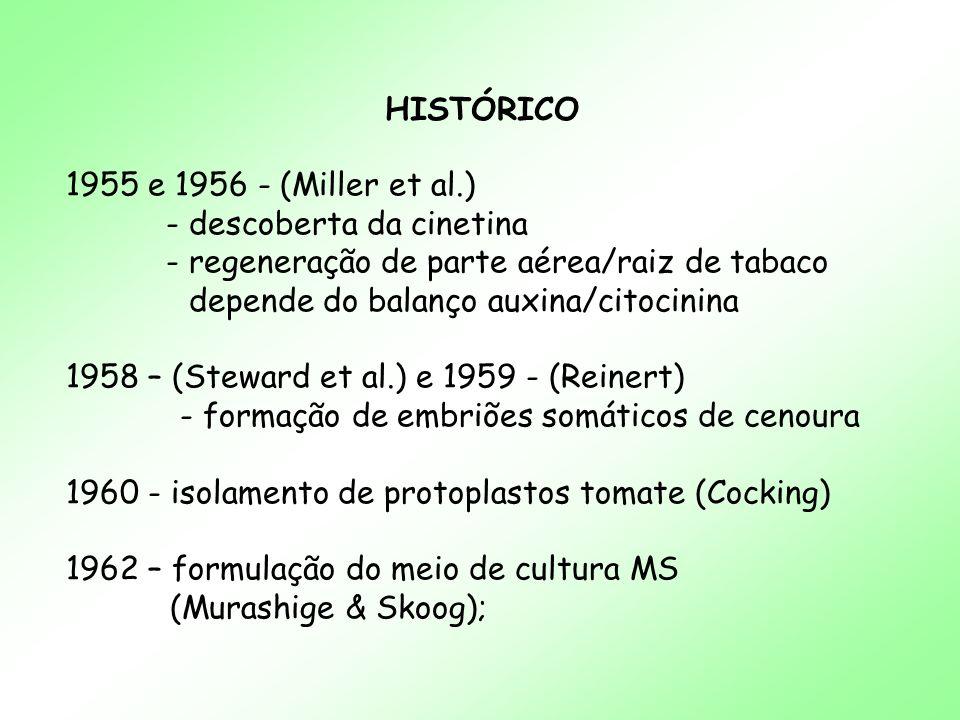 HISTÓRICO 1955 e 1956 - (Miller et al.) - descoberta da cinetina - regeneração de parte aérea/raiz de tabaco depende do balanço auxina/citocinina 1958