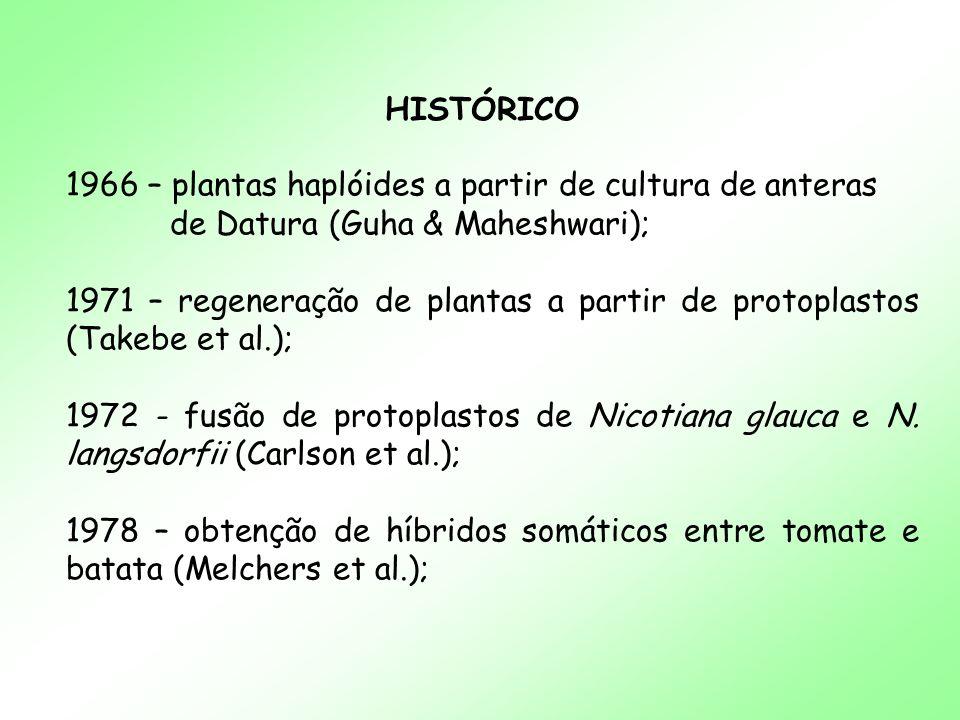 HISTÓRICO 1966 – plantas haplóides a partir de cultura de anteras de Datura (Guha & Maheshwari); 1971 – regeneração de plantas a partir de protoplasto