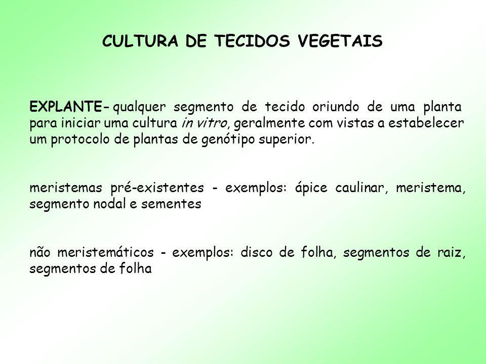 CULTURA DE TECIDOS VEGETAIS EXPLANTE- qualquer segmento de tecido oriundo de uma planta para iniciar uma cultura in vitro, geralmente com vistas a est