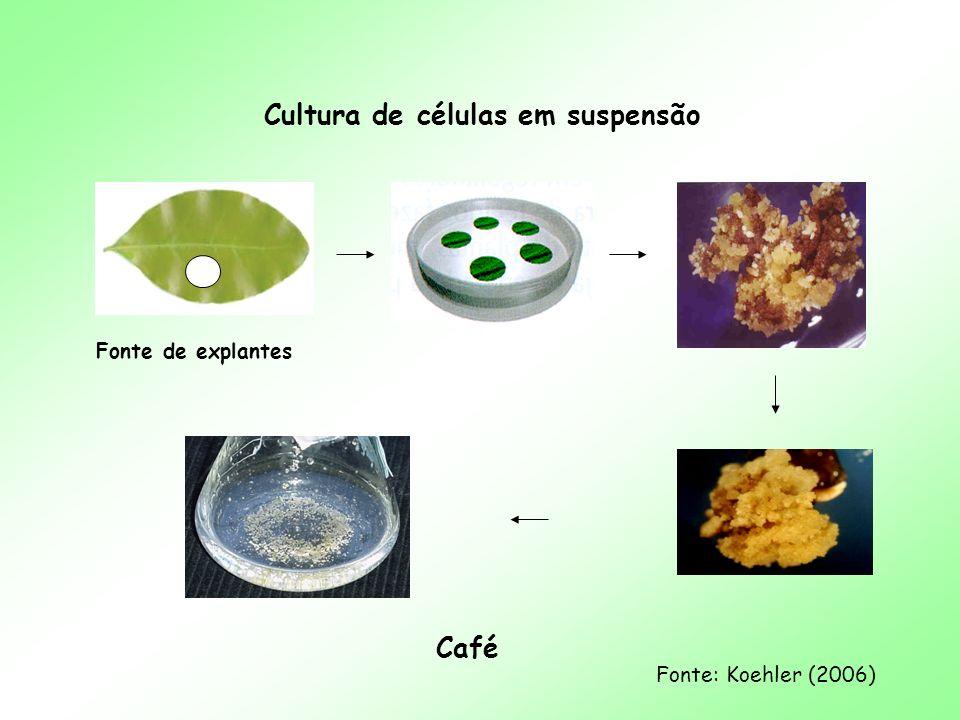 Cultura de células em suspensão Café Fonte: Koehler (2006) Fonte de explantes