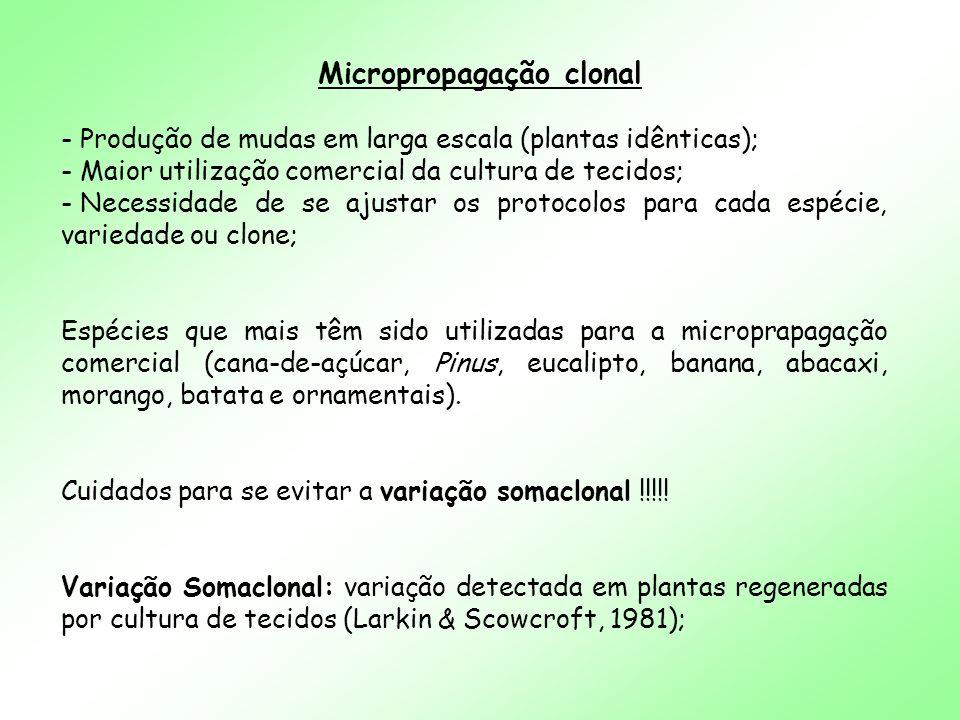 Micropropagação clonal - Produção de mudas em larga escala (plantas idênticas); - Maior utilização comercial da cultura de tecidos; - Necessidade de s