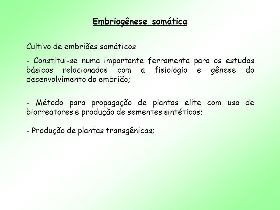 Embriogênese somática Cultivo de embriões somáticos - Constitui-se numa importante ferramenta para os estudos básicos relacionados com a fisiologia e