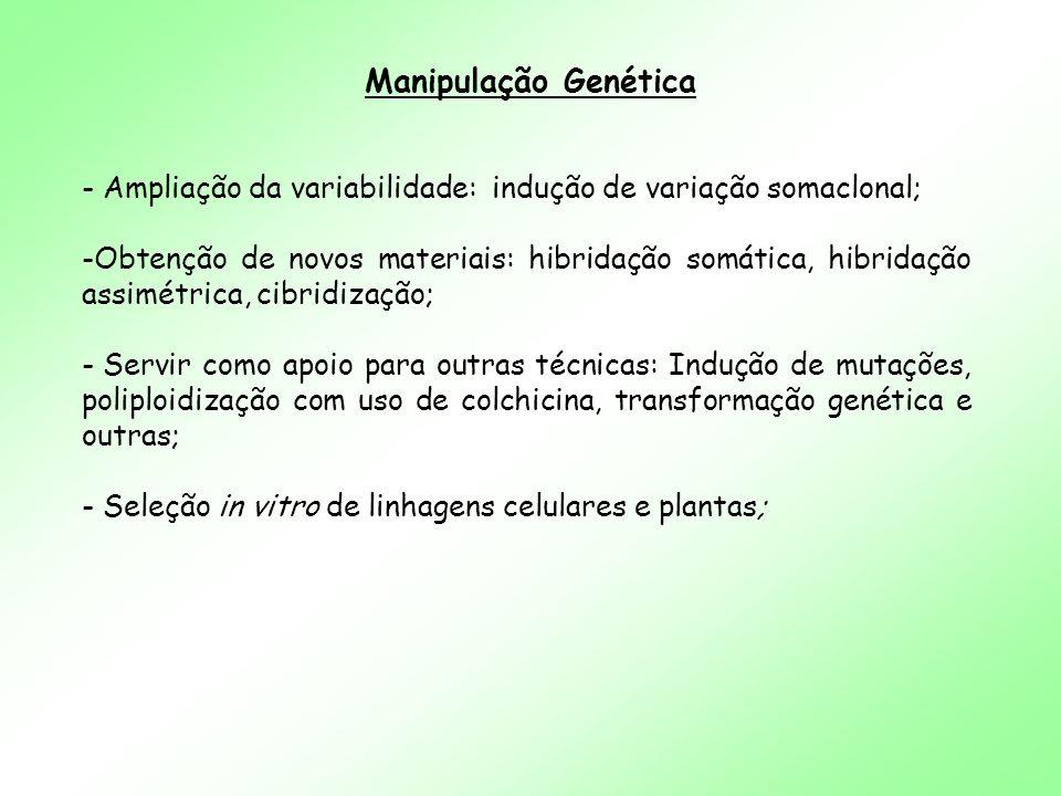 Manipulação Genética - Ampliação da variabilidade: indução de variação somaclonal; -Obtenção de novos materiais: hibridação somática, hibridação assim