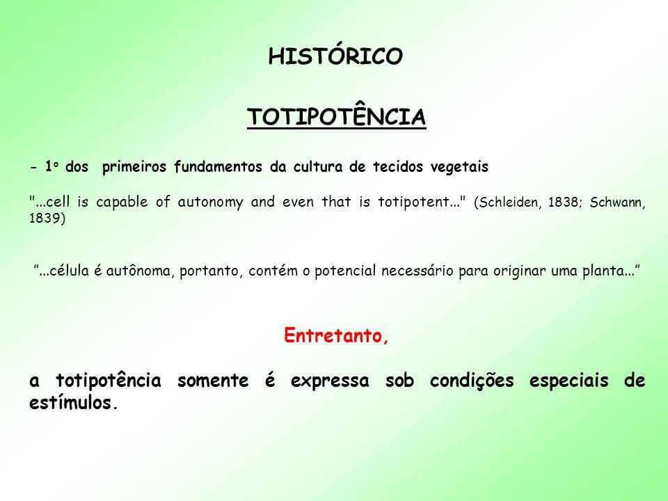 HISTÓRICO TOTIPOTÊNCIA - 1 o dos primeiros fundamentos da cultura de tecidos vegetais