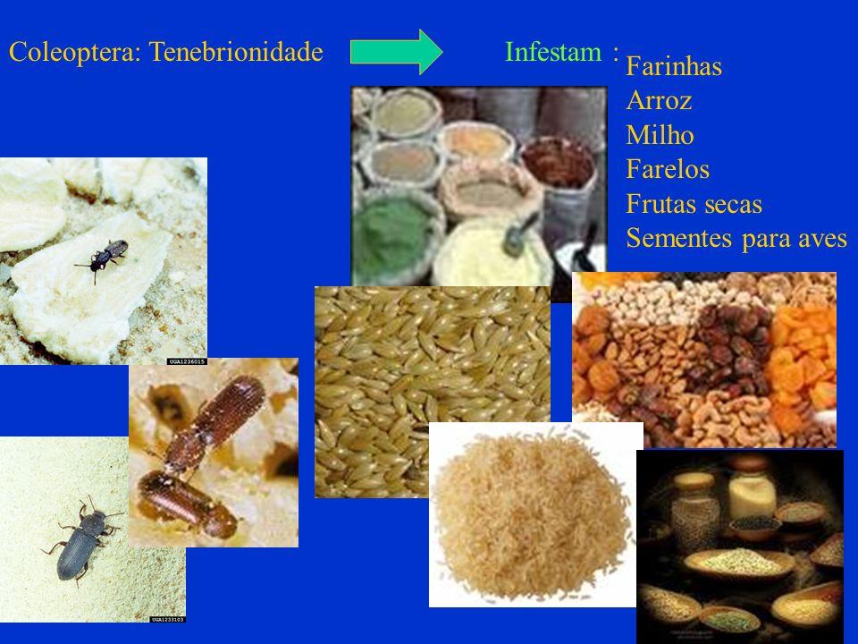 Coleoptera: Tenebrionidade Infestam : Farinhas Arroz Milho Farelos Frutas secas Sementes para aves