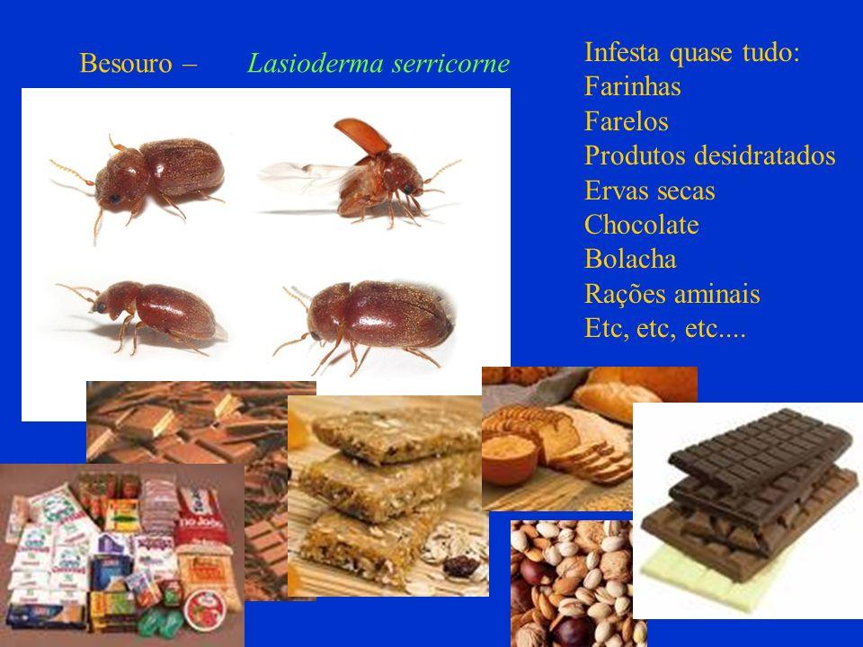 Besouro – Lasioderma serricorne Infesta quase tudo: Farinhas Farelos Produtos desidratados Ervas secas Chocolate Bolacha Rações aminais Etc, etc, etc.