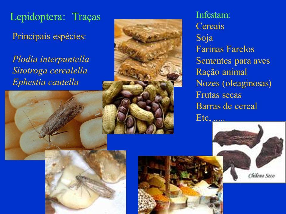 Lepidoptera: Traças Infestam: Cereais Soja Farinas Farelos Sementes para aves Ração animal Nozes (oleaginosas) Frutas secas Barras de cereal Etc,.....