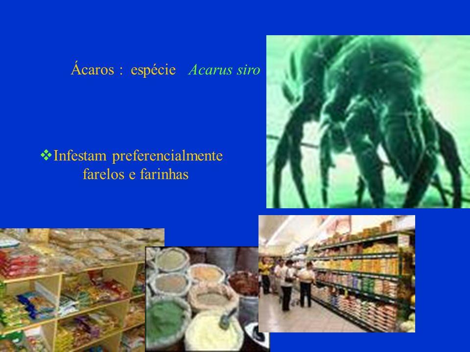 Ácaros : espécie Acarus siro Infestam preferencialmente farelos e farinhas