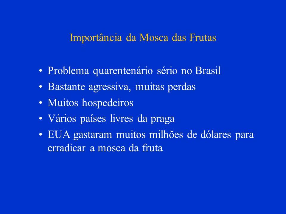 Importância da Mosca das Frutas Problema quarentenário sério no Brasil Bastante agressiva, muitas perdas Muitos hospedeiros Vários países livres da pr