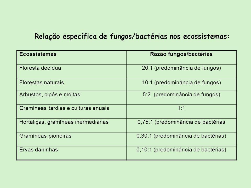 Relação específica de fungos/bactérias nos ecossistemas: EcossistemasRazão fungos/bactérias Floresta decídua20:1 (predominância de fungos) Florestas n