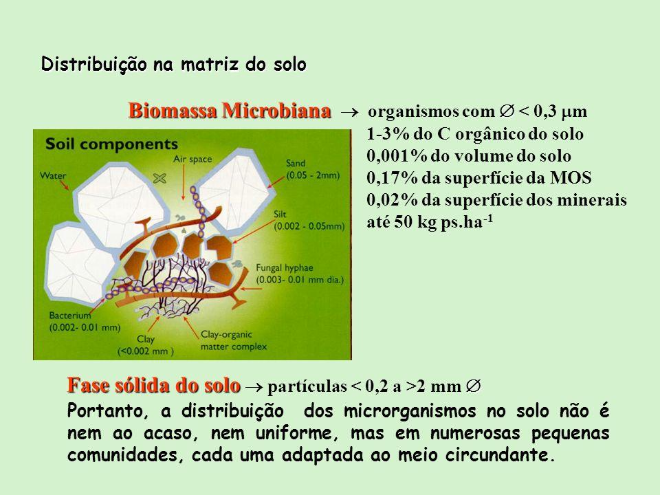 Biomassa Microbiana Biomassa Microbiana organismos com < 0,3 m 1-3% do C orgânico do solo 0,001% do volume do solo 0,17% da superfície da MOS 0,02% da