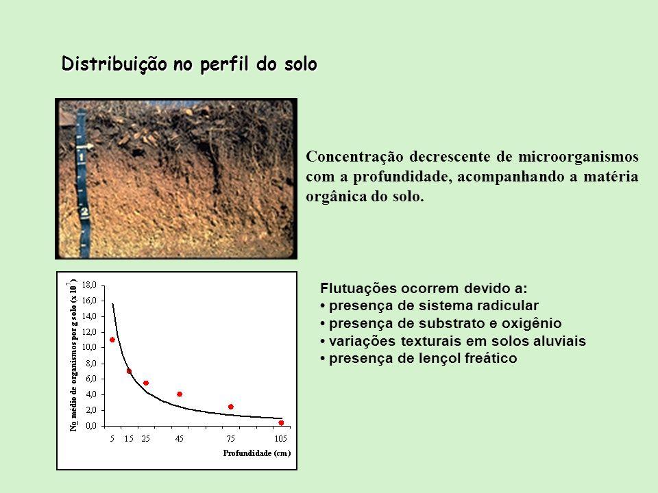 Distribuição no perfil do solo Concentração decrescente de microorganismos com a profundidade, acompanhando a matéria orgânica do solo. Flutuações oco