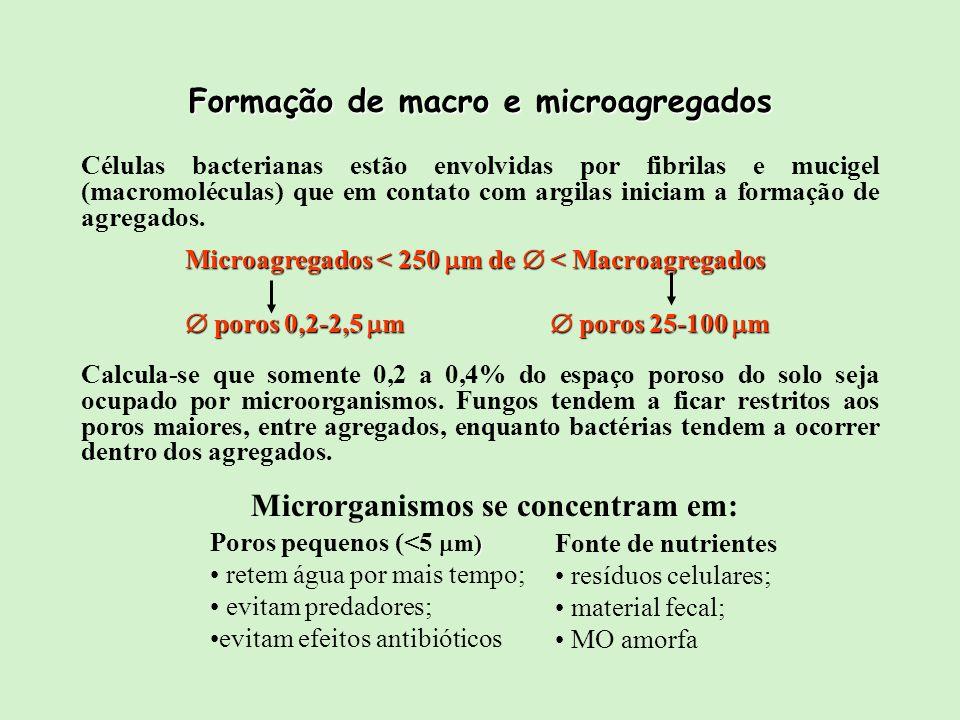 Calcula-se que somente 0,2 a 0,4% do espaço poroso do solo seja ocupado por microorganismos. Fungos tendem a ficar restritos aos poros maiores, entre
