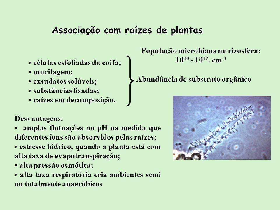 Associação com raízes de plantas População microbiana na rizosfera: 10 10 - 10 12. cm -3 células esfoliadas da coifa; mucilagem; exsudatos solúveis; s