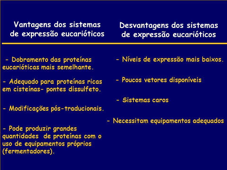 Vantagens dos sistemas de expressão eucarióticos - Dobramento das proteínas eucarióticas mais semelhante. - Modificações pós-traducionais. - Pode prod