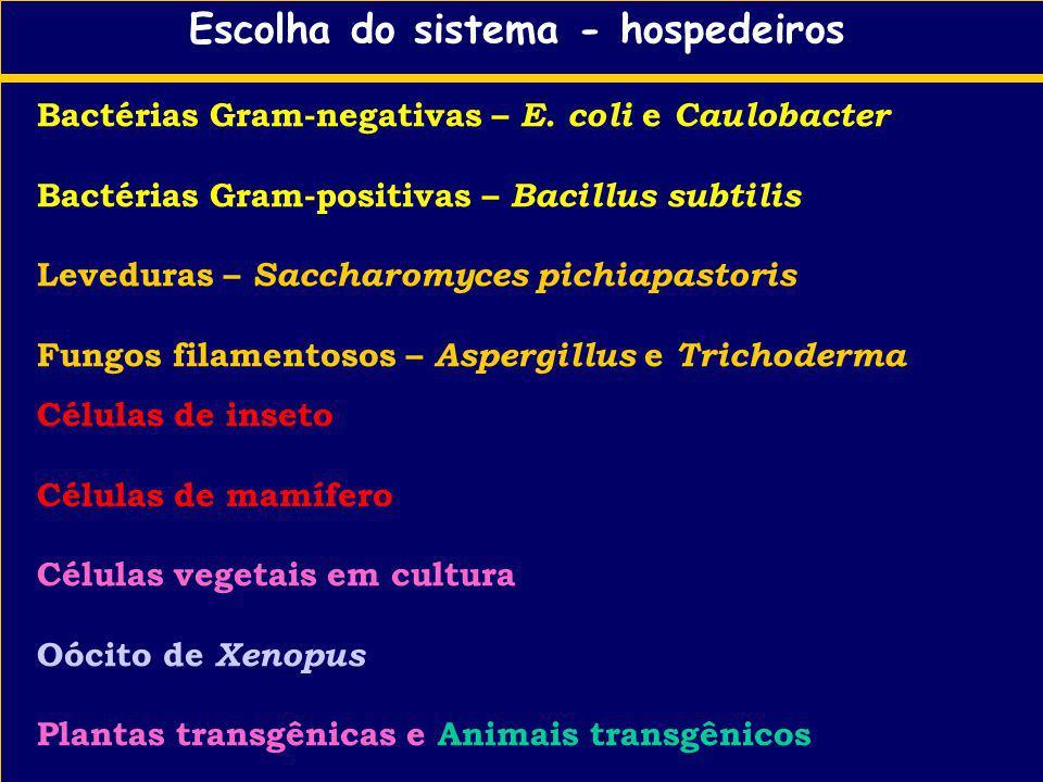 Escolha do sistema - hospedeiros Bactérias Gram-negativas – E. coli e Caulobacter Bactérias Gram-positivas – Bacillus subtilis Leveduras – Saccharomyc