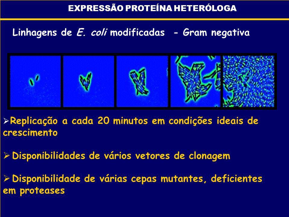Replicação a cada 20 minutos em condições ideais de crescimento Disponibilidades de vários vetores de clonagem Disponibilidade de várias cepas mutante