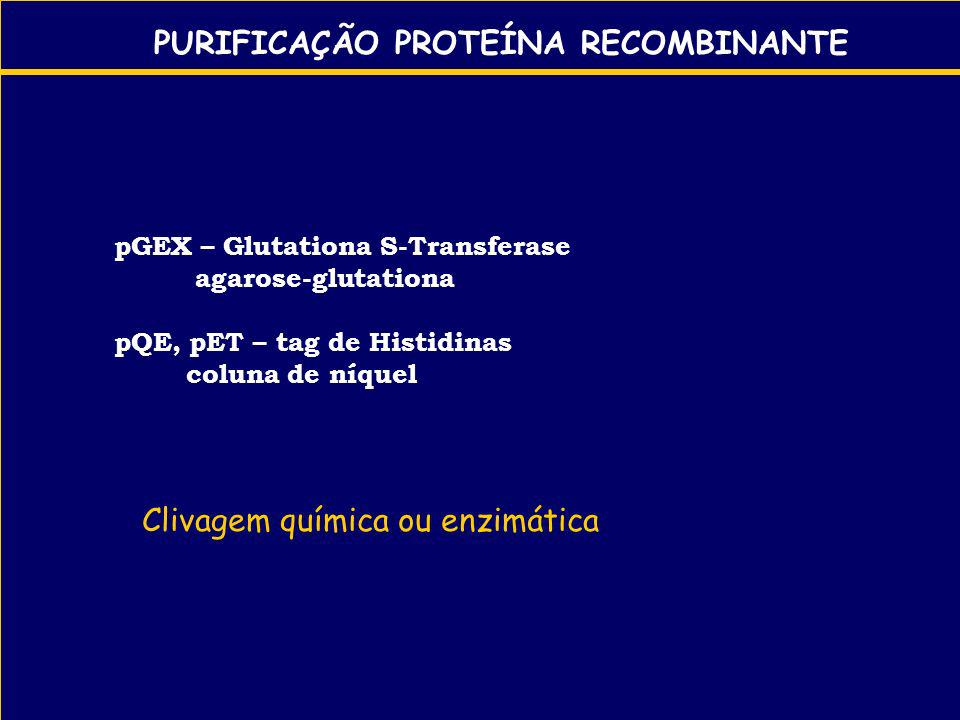 PURIFICAÇÃO PROTEÍNA RECOMBINANTE pGEX – Glutationa S-Transferase agarose-glutationa pQE, pET – tag de Histidinas coluna de níquel Clivagem química ou