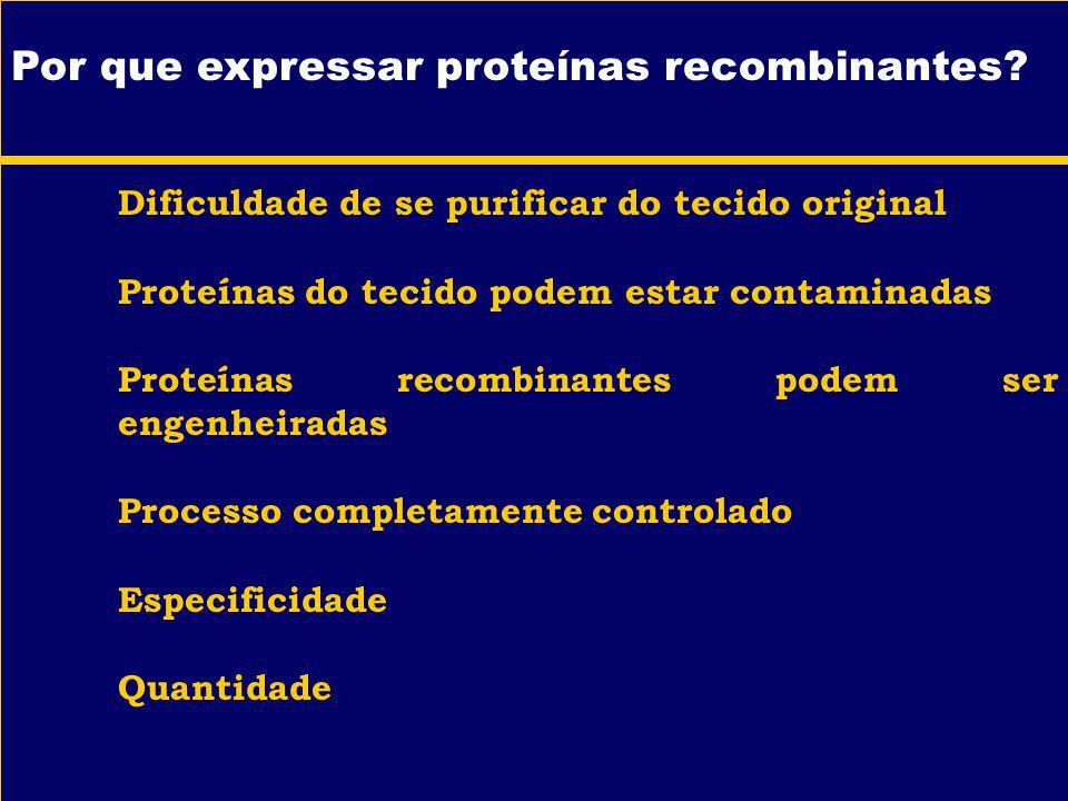 Por que expressar proteínas recombinantes? Dificuldade de se purificar do tecido original Proteínas do tecido podem estar contaminadas Proteínas recom