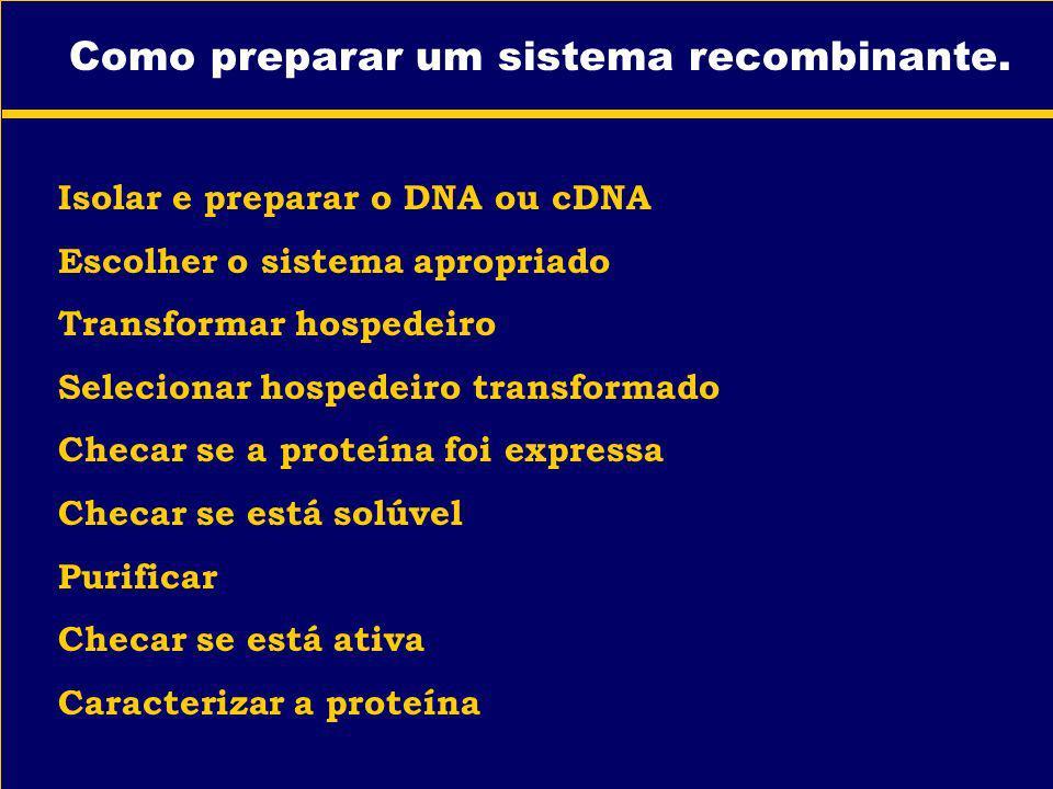 Como preparar um sistema recombinante. Isolar e preparar o DNA ou cDNA Escolher o sistema apropriado Transformar hospedeiro Selecionar hospedeiro tran