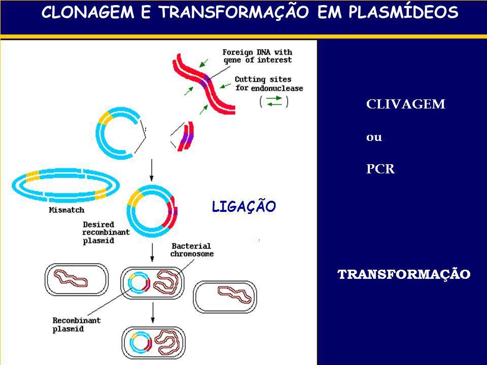 clonagem Cromatografia lavagenseluição