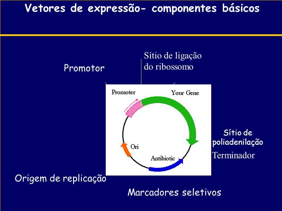 Vetores de expressão- componentes básicos malE M13 ORI- Marcadores seletivos Origem de replicação Promotor Sítio de poliadenilação Terminador Sítio de