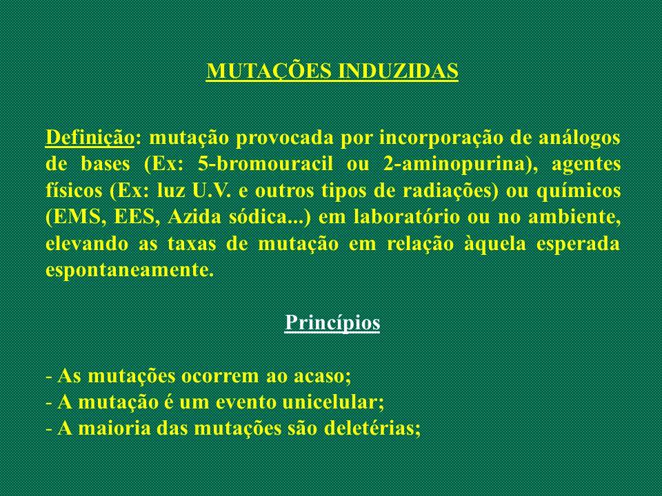 MUTAÇÕES INDUZIDAS Definição: mutação provocada por incorporação de análogos de bases (Ex: 5-bromouracil ou 2-aminopurina), agentes físicos (Ex: luz U