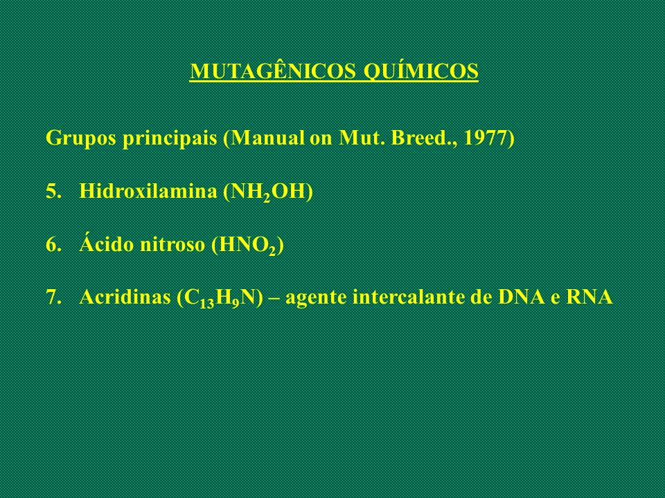 MUTAGÊNICOS QUÍMICOS Grupos principais (Manual on Mut. Breed., 1977) 5.Hidroxilamina (NH 2 OH) 6.Ácido nitroso (HNO 2 ) 7.Acridinas (C 13 H 9 N) – age