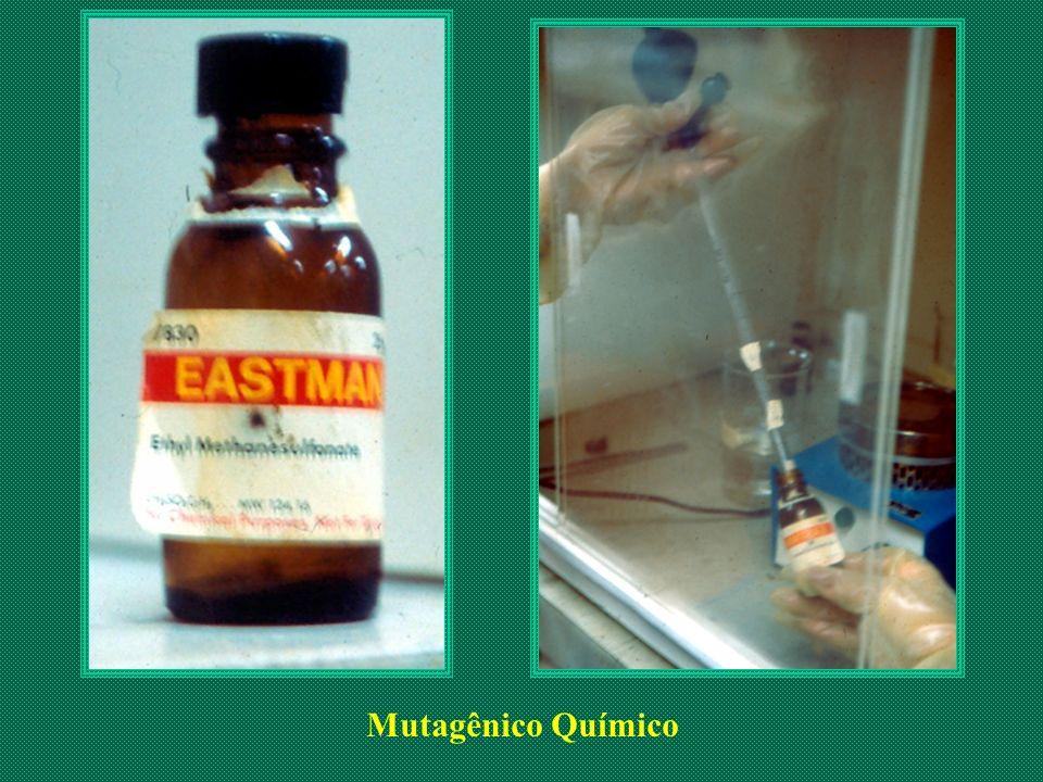 Mutagênico Químico