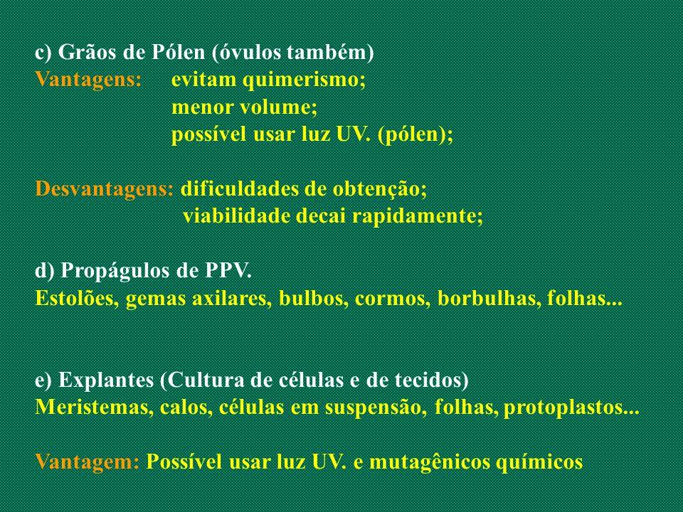 c) Grãos de Pólen (óvulos também) Vantagens:evitam quimerismo; menor volume; possível usar luz UV. (pólen); Desvantagens: dificuldades de obtenção; vi