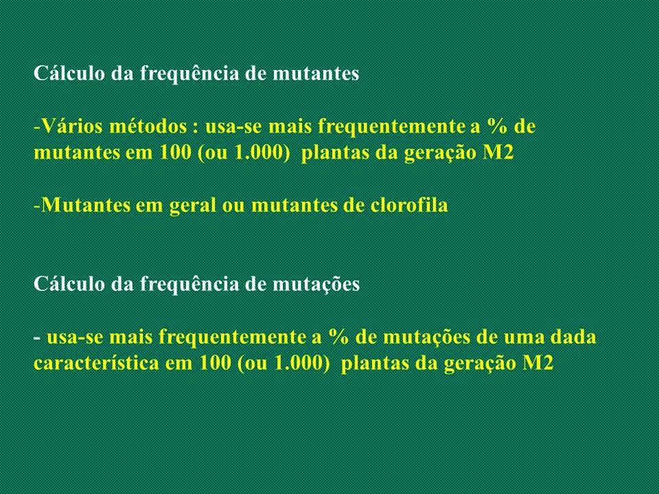 Cálculo da frequência de mutantes -Vários métodos : usa-se mais frequentemente a % de mutantes em 100 (ou 1.000) plantas da geração M2 -Mutantes em ge
