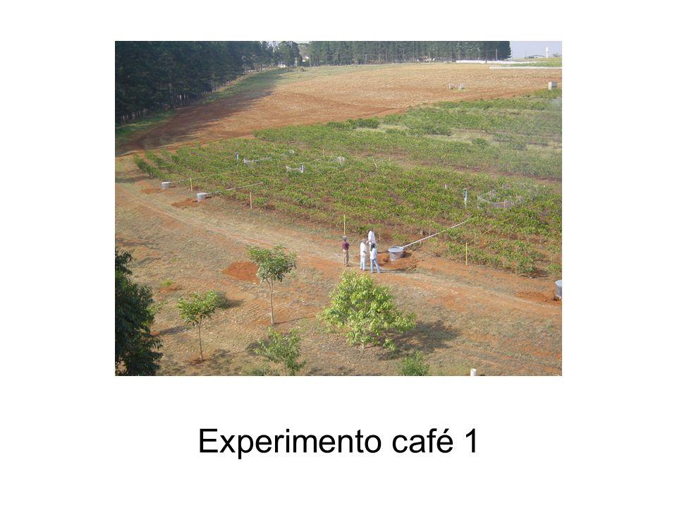 Experimento café 1