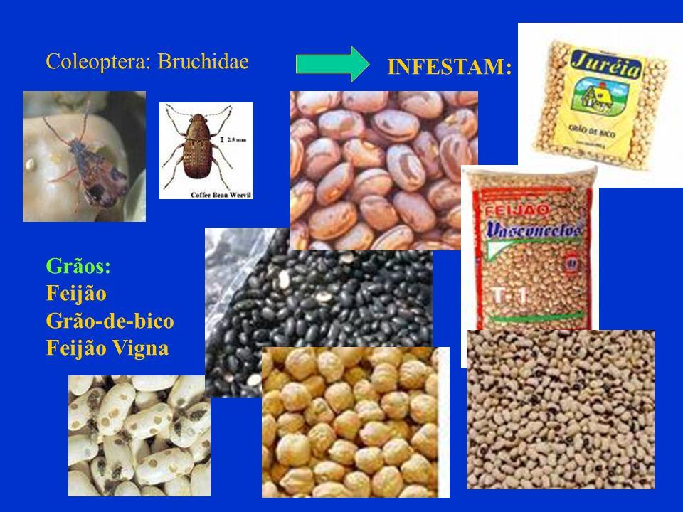 Coleoptera: Bruchidae INFESTAM: Grãos: Feijão Grão-de-bico Feijão Vigna