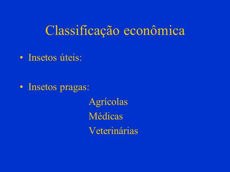 Classificação econômica Insetos úteis: Insetos pragas: Agrícolas Médicas Veterinárias