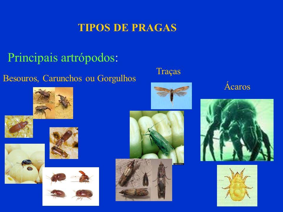 TIPOS DE PRAGAS Principais artrópodos: Besouros, Carunchos ou Gorgulhos Traças Ácaros