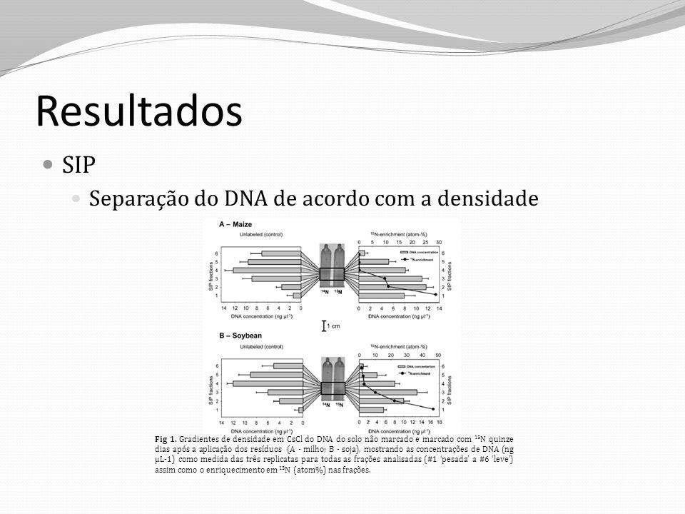 Resultados SIP Separação do DNA de acordo com a densidade Fig 1. Gradientes de densidade em CsCl do DNA do solo não marcado e marcado com 15 N quinze