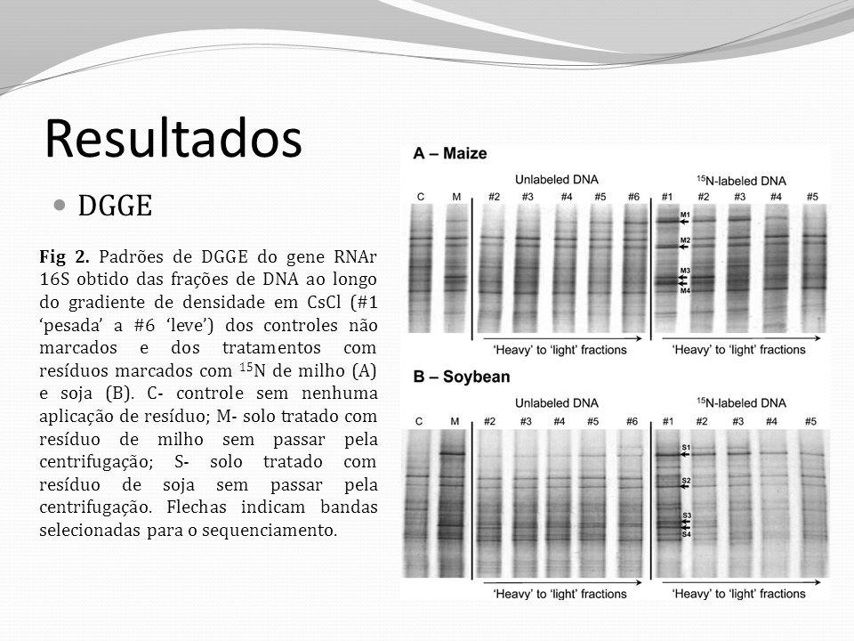 Resultados DGGE Fig 2. Padrões de DGGE do gene RNAr 16S obtido das frações de DNA ao longo do gradiente de densidade em CsCl (#1 pesada a #6 leve) dos