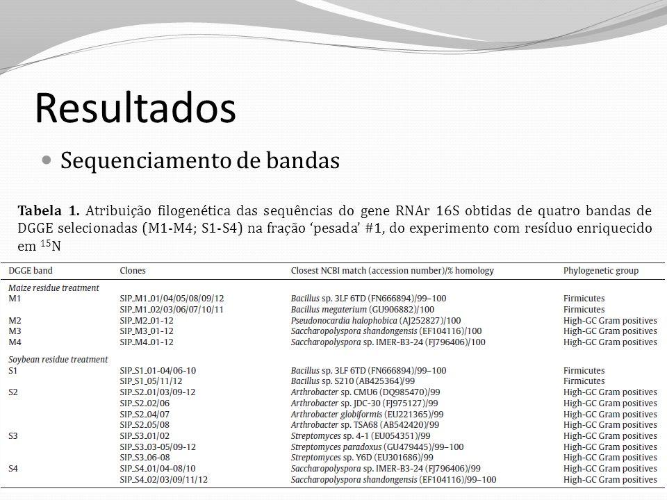Resultados Sequenciamento de bandas Tabela 1. Atribuição filogenética das sequências do gene RNAr 16S obtidas de quatro bandas de DGGE selecionadas (M