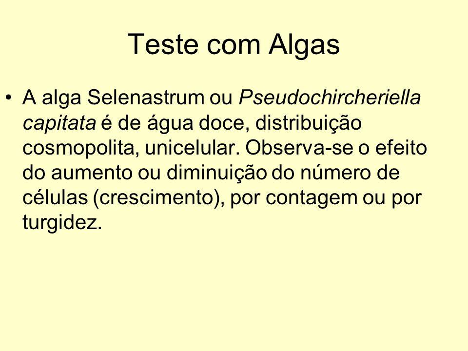 Teste com Algas A alga Selenastrum ou Pseudochircheriella capitata é de água doce, distribuição cosmopolita, unicelular. Observa-se o efeito do aument