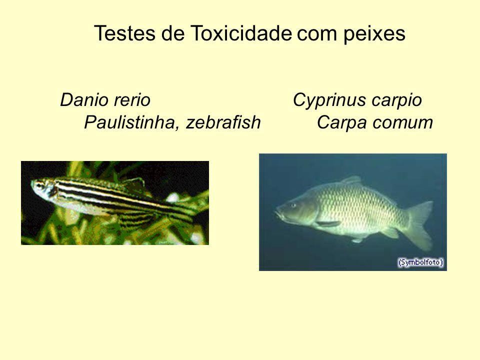 Danio rerio Paulistinha, zebrafish Cyprinus carpio Carpa comum Testes de Toxicidade com peixes