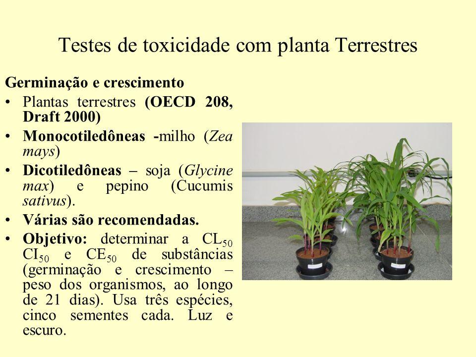 Testes de toxicidade com planta Terrestres Germinação e crescimento Plantas terrestres (OECD 208, Draft 2000) Monocotiledôneas -milho (Zea mays) Dicot
