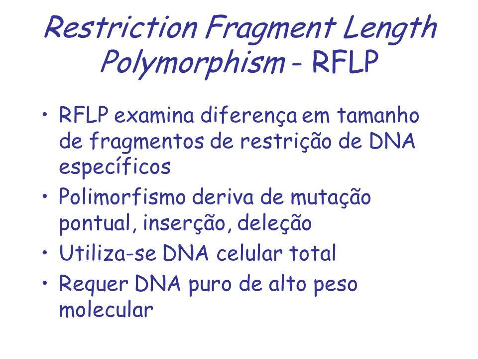 Restriction Fragment Length Polymorphism - RFLP RFLP examina diferença em tamanho de fragmentos de restrição de DNA específicos Polimorfismo deriva de