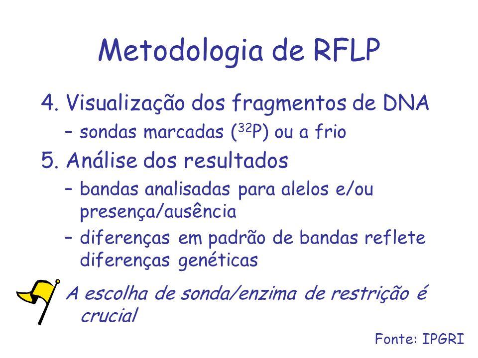 Metodologia de RFLP 4. Visualização dos fragmentos de DNA –sondas marcadas ( 32 P) ou a frio 5. Análise dos resultados –bandas analisadas para alelos