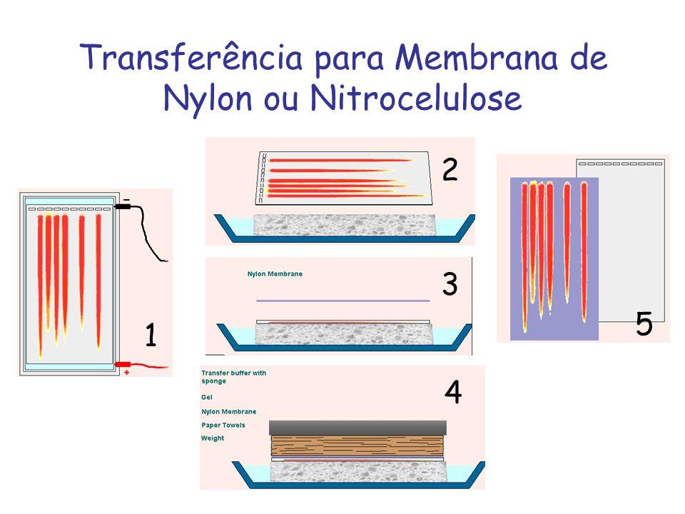 Transferência para Membrana de Nylon ou Nitrocelulose 1 2 3 4 5