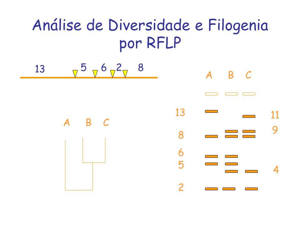 13 8 2 5 6 Análise de Diversidade e Filogenia por RFLP 13 5628 11 9 ABC 4 ABC