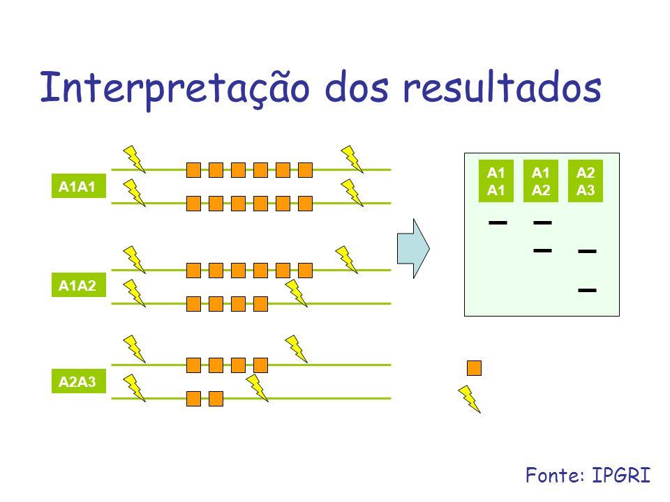 Interpretação dos resultados A1A1 A1A2 A2A3 A1 A1 A2 A2 A3 Repetição Sítio de Restrição Fonte: IPGRI