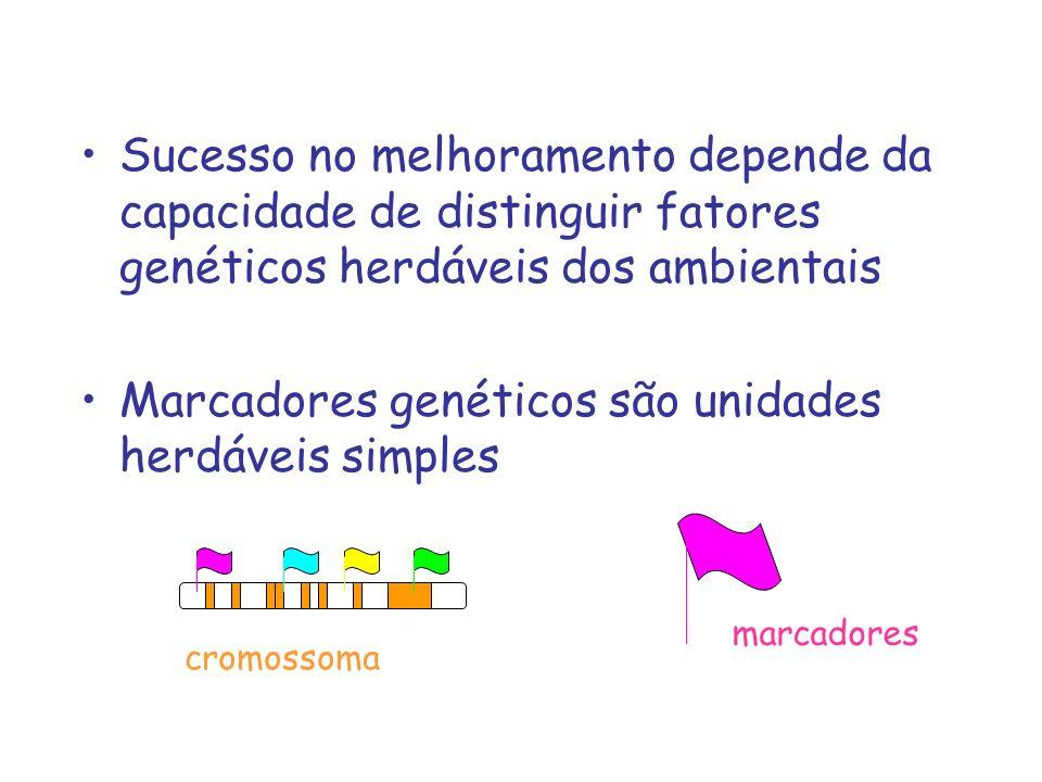 Polimorfismo de DNA resulta acúmulo de mutações –pontual ou inserção/deleção –macro-rearranjos: translocações, inversões, deleções