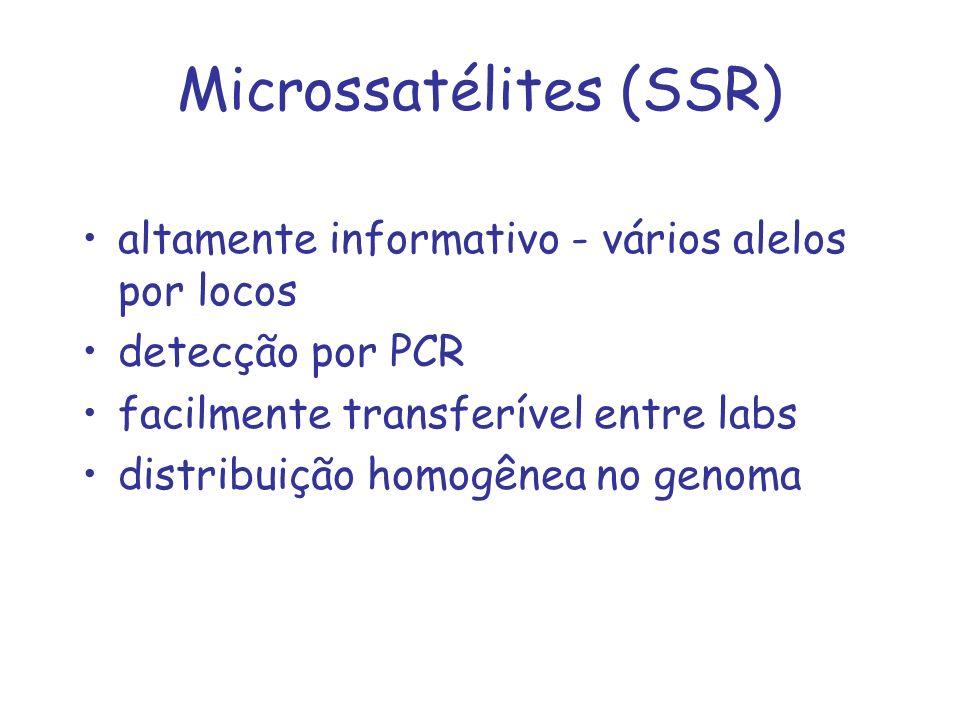 Microssatélites (SSR) altamente informativo - vários alelos por locos detecção por PCR facilmente transferível entre labs distribuição homogênea no ge
